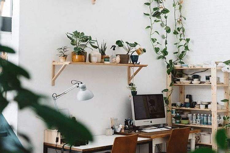 aménager un espace de travail avec des plantes